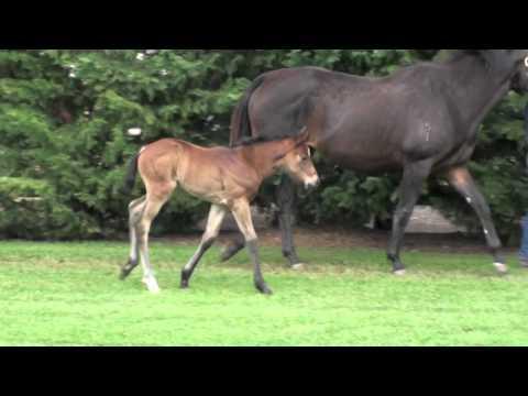 Eliza Park Foals 2012 Written Tycoon X Miss Theron