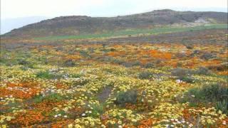 Zak van Niekerk - Wie het al daai blomme geplant